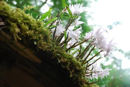 White petalled flowers bloom on a moss covered archway