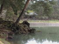 Hiraizumi42